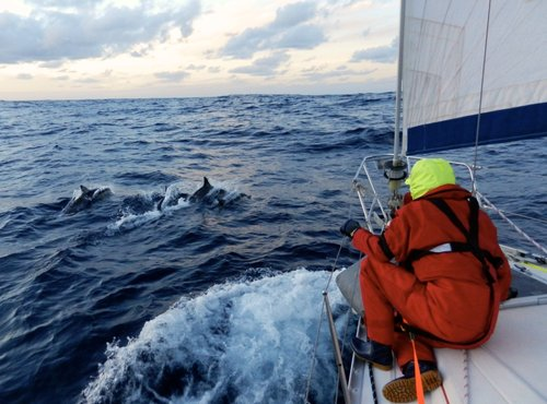 Offshore+sailing+with+dolphins
